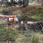 Beavers enrich wetlands