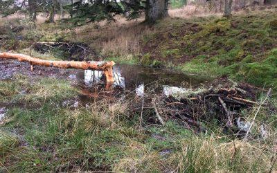 Beavers enrich wetlands