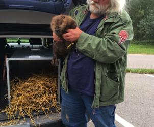 Beaver in Bavaria: Lessons for Scotland