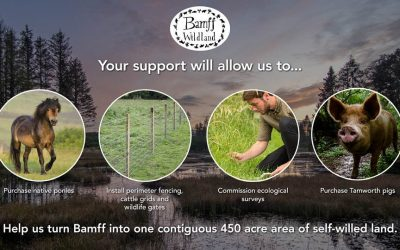 Rewilding Bamff into the future: Sophie Ramsay